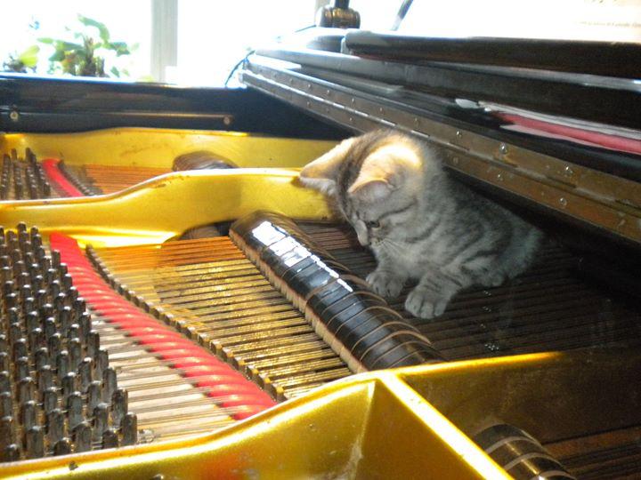 Faristamo klaver